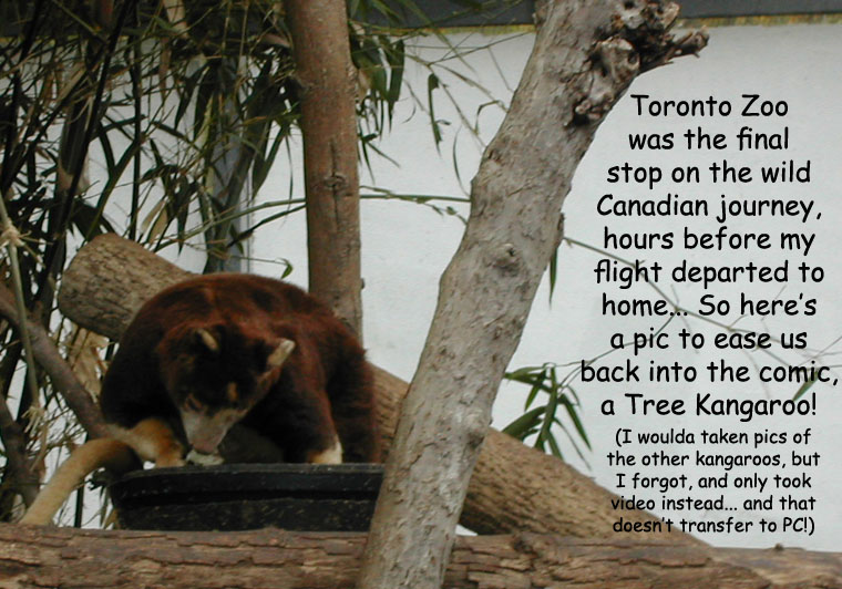 Canadian Filler: Tree Kangaroo!