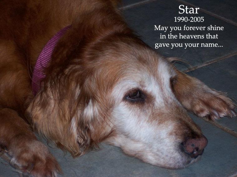 Star: 1990-2005
